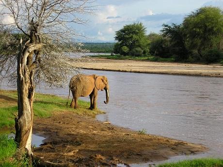 Ready-for-an-afternoon-dip-Samburu-Game-Reserve-Kenya.jpg