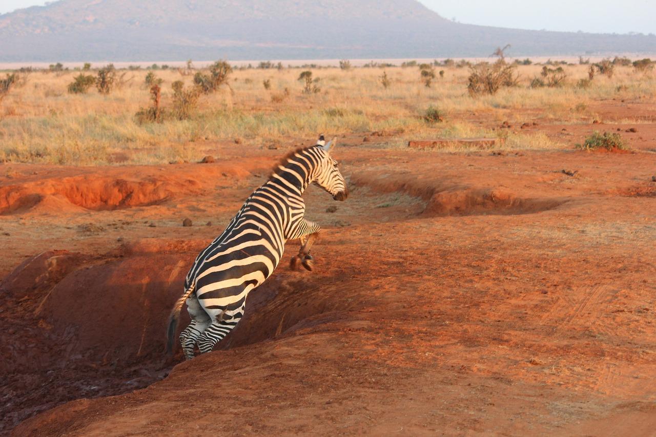 zebra-111699_1280