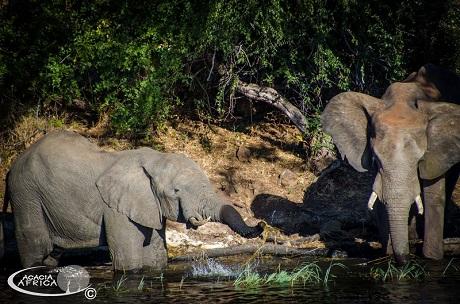 Acacia Adventure Africa - Nairobi to Cape town 43 overland safari-68