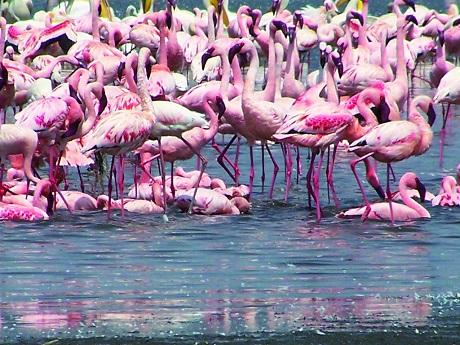 Ken_Flamingoes-V2__1438.jpg