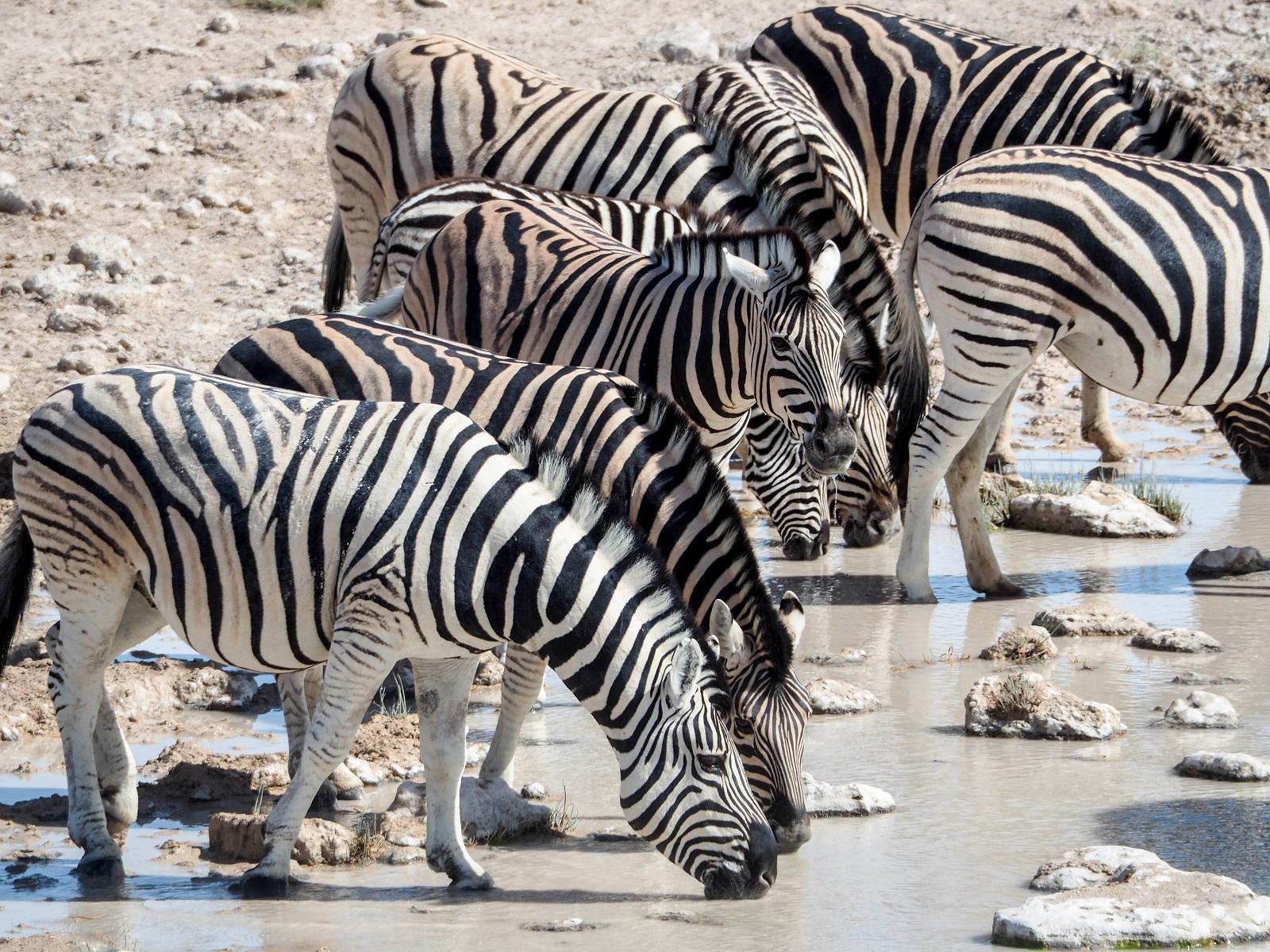 """Namibia's famous National Park """"Etosha'!"""