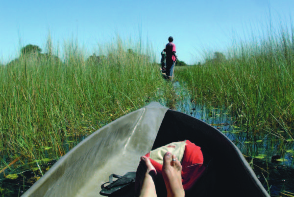 a-relaxing-water-based-safari-in-the-okavango-delta-botswana