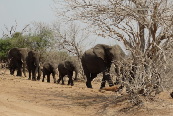 chobe-national-park-botswana-dsc07209