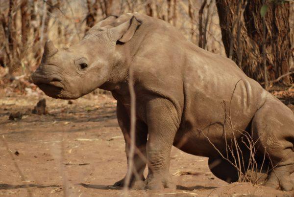 mosi-oa-tunya-national-park-zambia-dsc07012