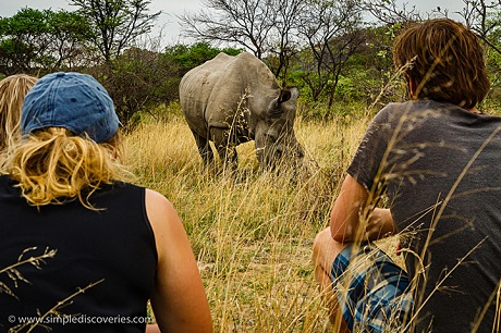 We got within meters of a pair of endangered African White Rhinos.