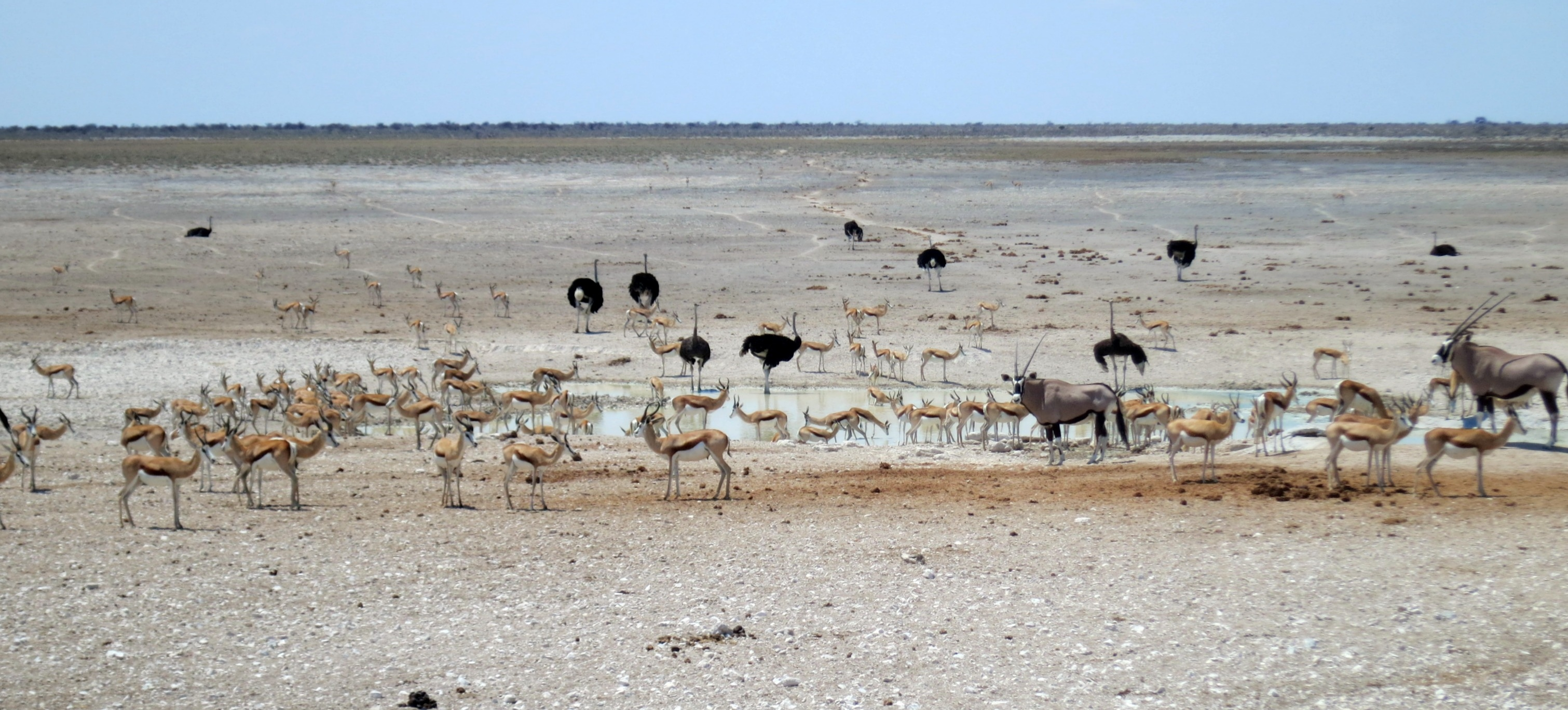 Experience Chills & Thrills at Etosha!