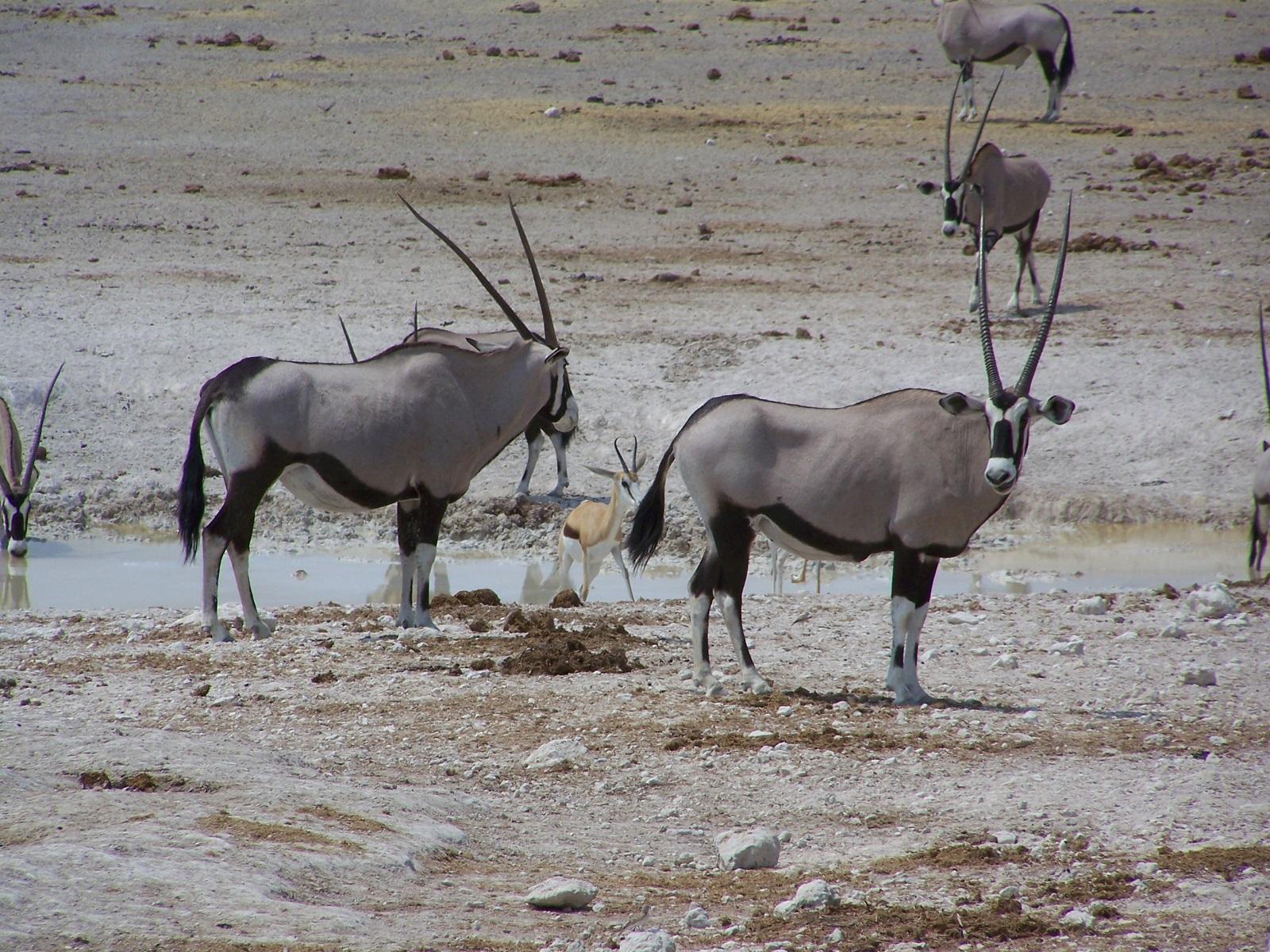 Namibia's top ten hidden treasures