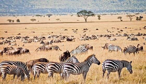 Africa Overland Safari Tanzania