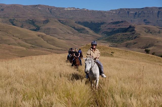 Horses_Drakensberg2_VM SA trip (June 2017)