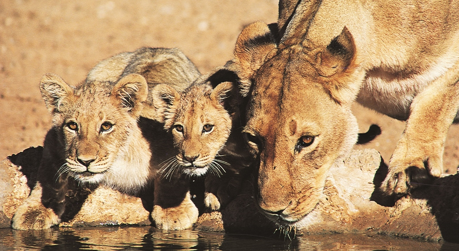 Walking Safaris That Will WOW!