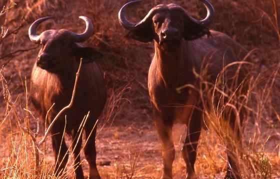 Victoria Falls_Zimabawe (1)