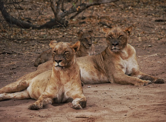 Chobe National Park_gameviewing (14)