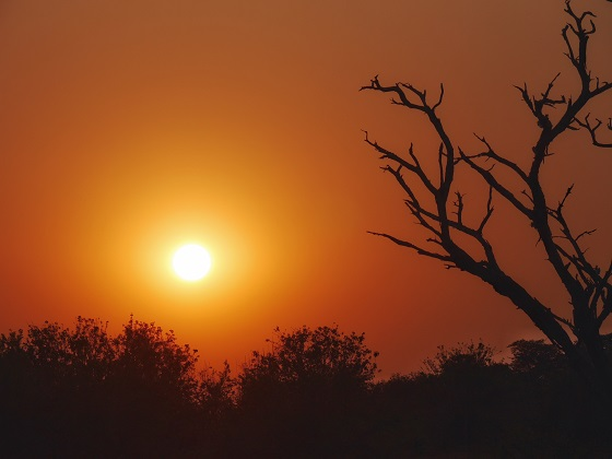 Chobe National Park_gameviewing (18)
