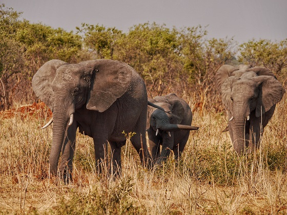 Chobe National Park_gameviewing (8)