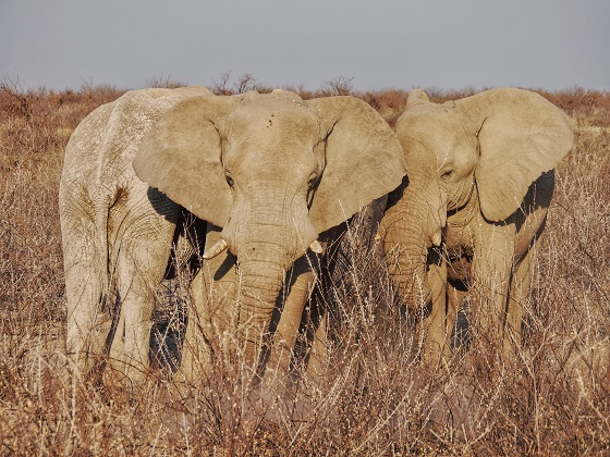 Etosha National Park (2)