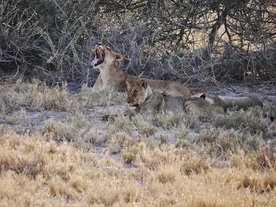 Etosha National Park (4)