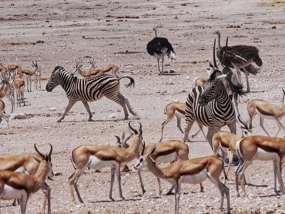 Etosha National Park (5)