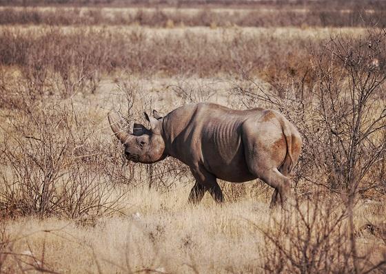 Etosha National Park (6)