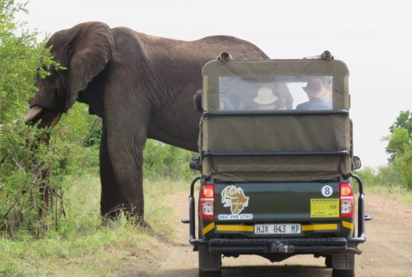 Kurt Safari Kruger Park (16)