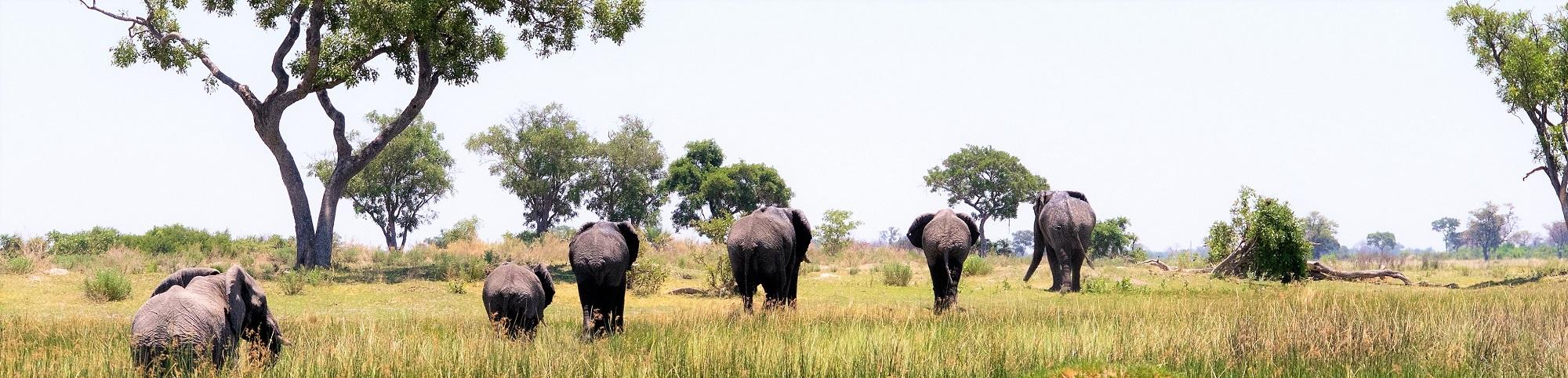 6 Unique Experiences In Botswana