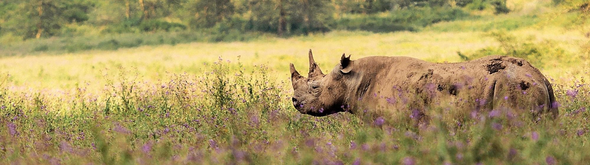 May Safari Bites