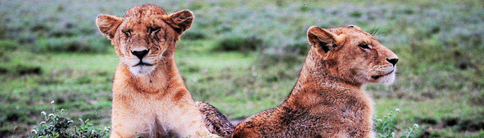 Celebrate The Upcoming Release Of The Lion King With Our Amazing Animal Encounters Sale