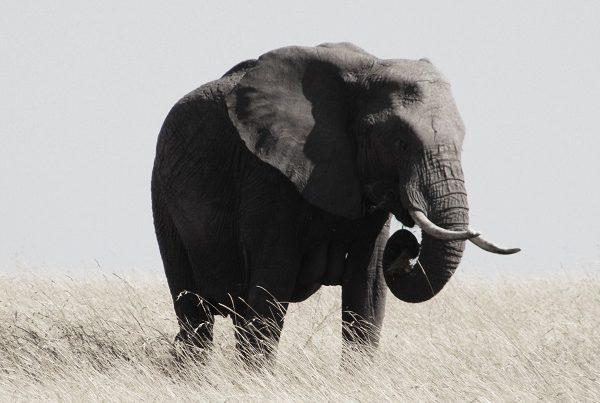 Elephant - Sleepy Backpacker