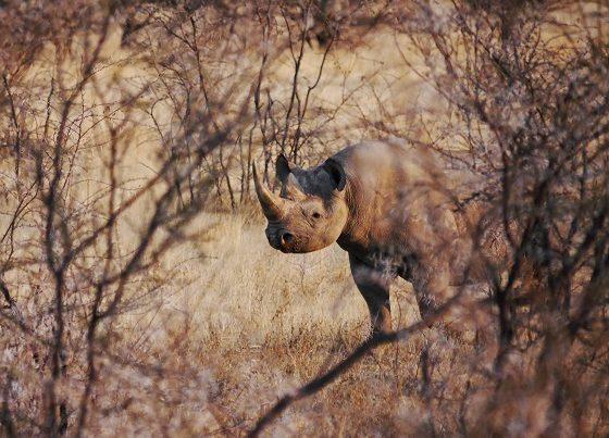 Etosha National Park (1)