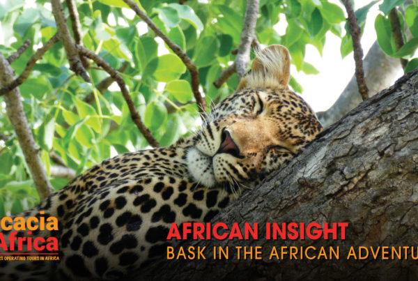 ACACIA AFRICA_0318_MAR CREATIVES