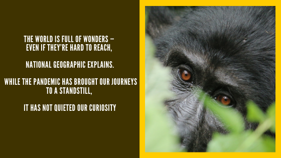 Natgeo Travel quote and photograph of Mountain Gorilla