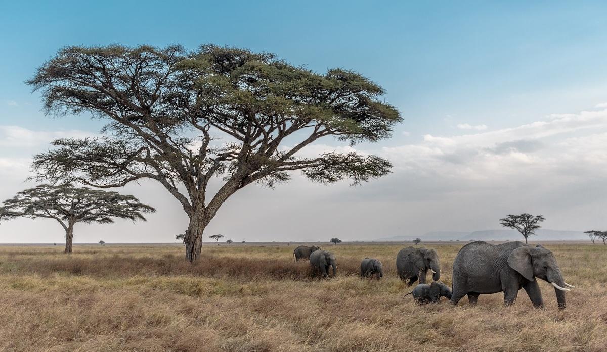 Tanzania, Zanzibar, Pemba
