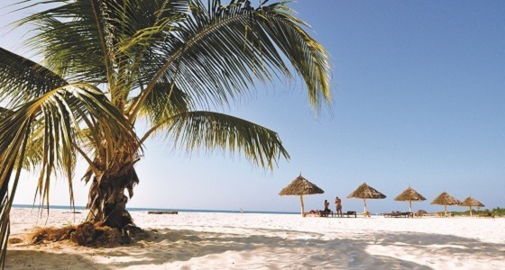 Accommodated zanzibar tour tanzania adventure tour for Plante zanzibar